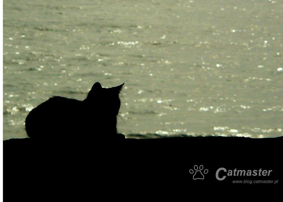 Z kociego na nasze: koci foch (i jak go wykorzystać)