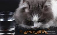 Dry food ? facts, myths and misuse
