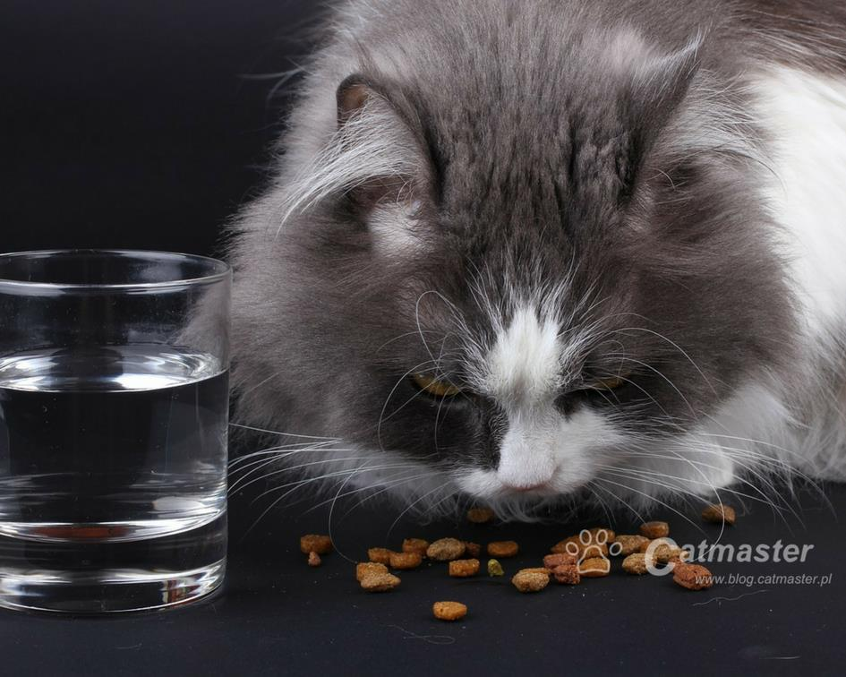 Dry food – facts, myths and misuse