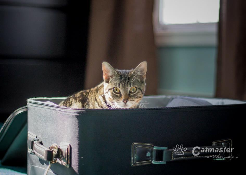 Jedziemy na wycieczkę, bierzemy kota w teczkę!