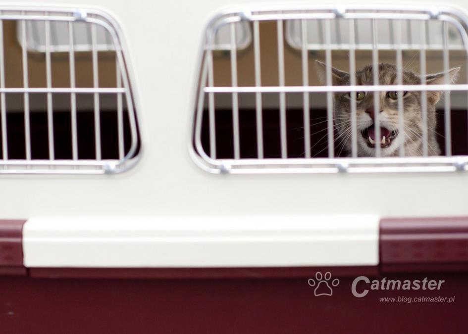 Co zrobić, by Twój kot polubił transporter?