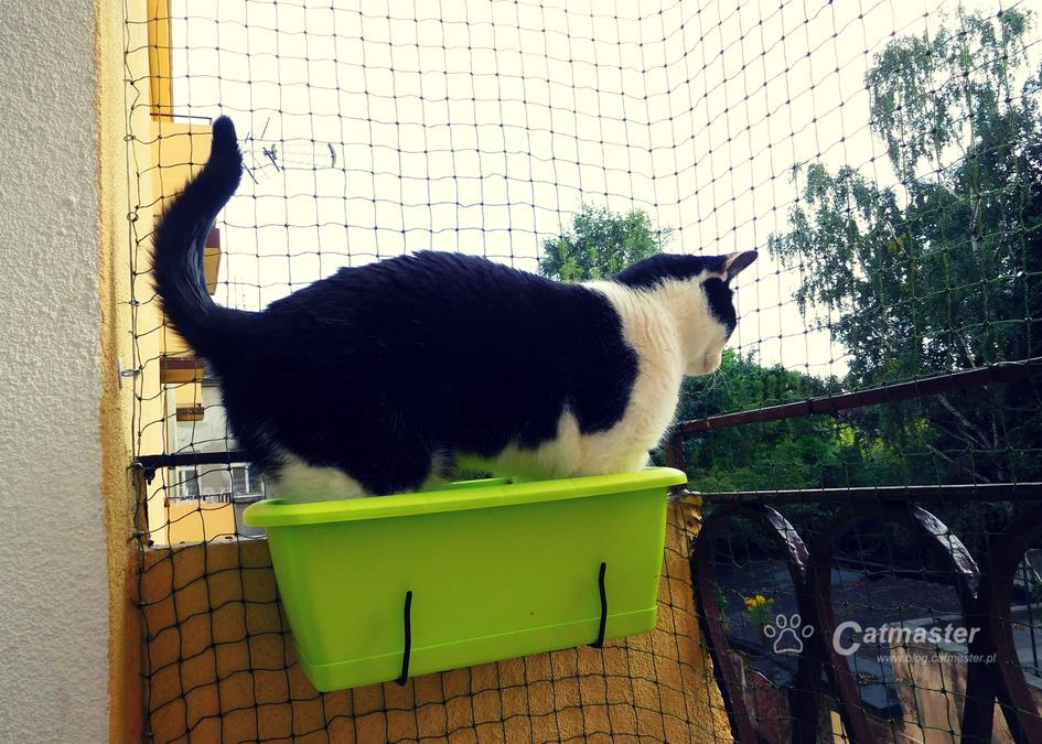 Diy Koci Taras Widokowy Catmaster Blog O Kotach