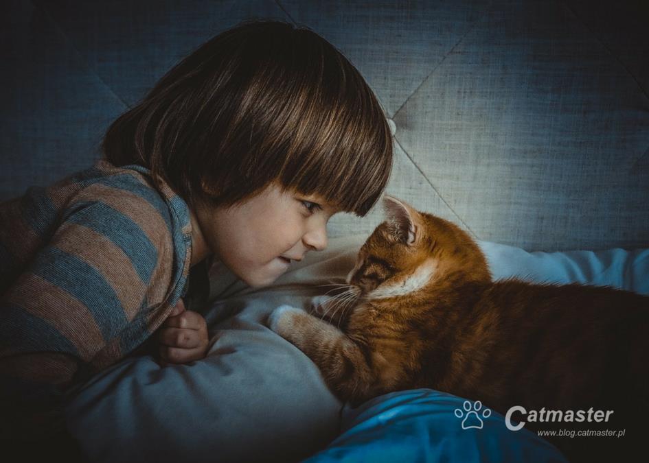 Jak przygotować kota na dziecko (cz. 3)