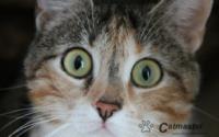 Jak znaleźć kotu nowy dom?