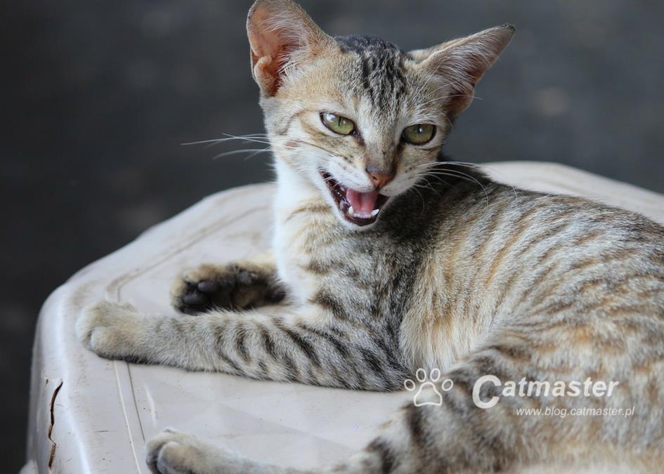 Kot nie służy do głaskania