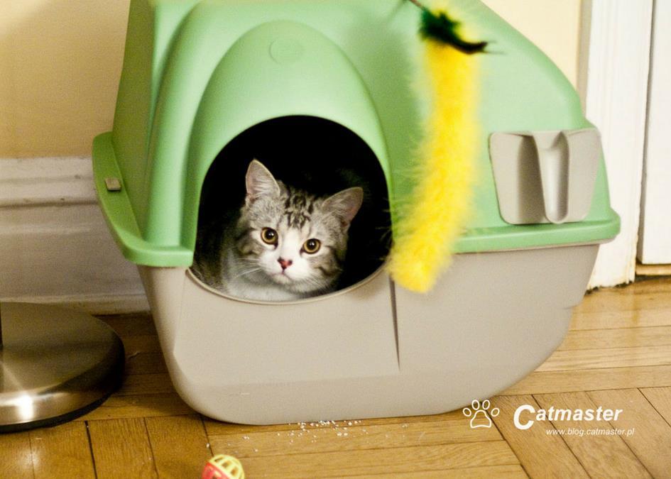 Nauka kuwetowania dla opornych (kotów) cz. 1