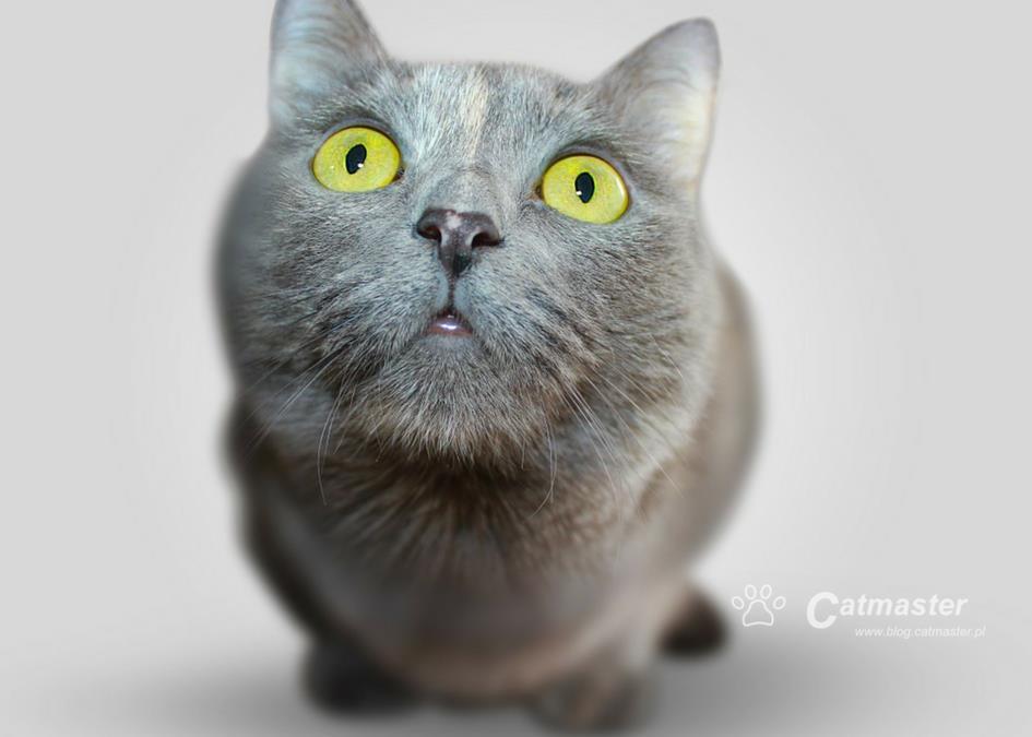 Nauka kuwetowania dla opornych (kotów) cz. 2