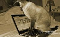 W czym pomogą kotom okrutne zdjęcia?