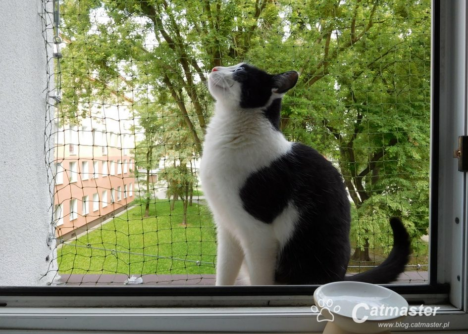 Kot w wynajmowanym mieszkaniu