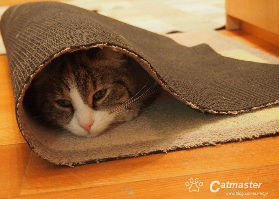 Feromony, suple i spółka – łagodzimy koci stres