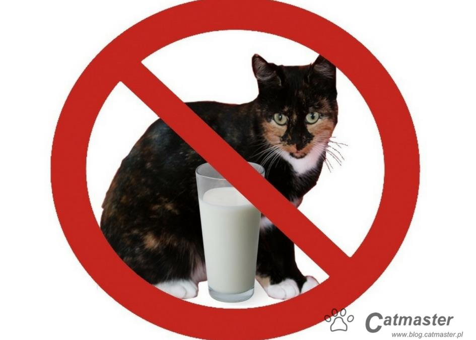 Wszystko, co musisz wiedzieć o kotach i mleku